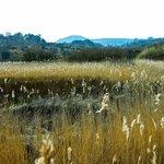 Beautiful Grass Marshland at Lligwy Beach.