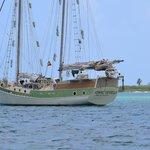 One World Sailing