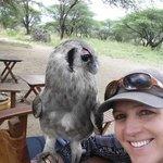 Resident Eagle Owl