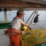Lobstering in a way of life on Deer Isle