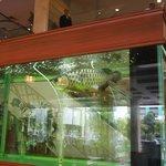 lobby - Fish Tank