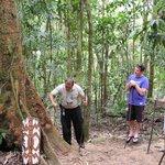 Indigenous guide explaining uses of rainforest flora