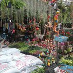Nearby plant market en route to Tha Tewet where you catch the river bus to the Wats
