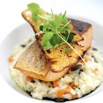 Salmon with limon risotto