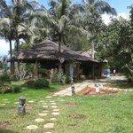 coco palm