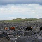 Wild horses and volcanic rock