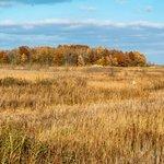 Marsh and Hardwood Hammock