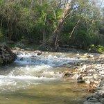 Creek on the premises