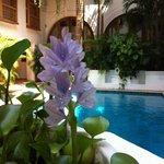 flores de um dia, na piscina