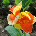 Pretty flowers everywhere