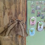 Magnets and butterfly
