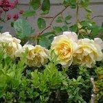 Les roses manoir de boisairault chambre d'hôtes de charme