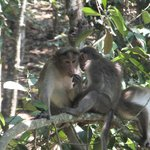 Monkeys viewed from balcony