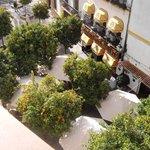 Uitzicht op de sinaasappelboompjes