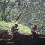 Не забудьте гостинцы для обезьян!