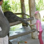 Feeding baby elephants