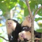 Monkeys hang out near the beaches