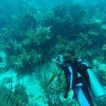 Corales Punta Rusia Scuba Diving & Snorkeling