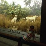 and kids love the giant dioramas