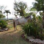 Garten + Pferd