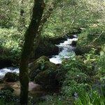 local walks to river creek