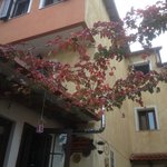 a nice red plant next to arabas lounge bar