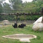 Zoo Palmyre, chimpanzés