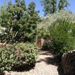 the lovely garden