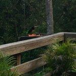 The Dining Terrace (also a bird-watching spot)