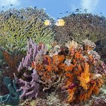 Wakatobi's shallow reefs are within easy access, with the house reef just steps from the beach.
