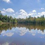 Palmetto Island Pond