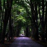 Weg durch den Stadtwald