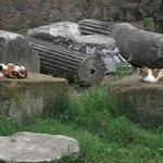 Várias colunas coríntias que faziam parte do Ninfeu. Há muitos gatos no local.