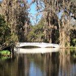 bridge near the plantation