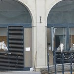 The stables of the Spanish Riding School