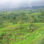 Jati Luwih Rice Terrace Bali
