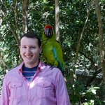 A friendly green macaw