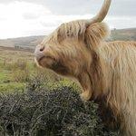 An Exmoor beastie
