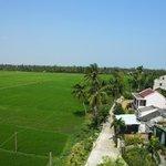 Blick in die Reisfelder