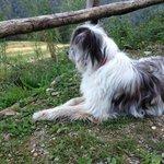 Einer der Hofhunde, welcher die Ausritte begleitet