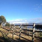 Die Sicht vor den Paddocks über den Gardasee (Vom Gästehaus aus)
