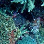 Scorpionfish at Crystal Bay