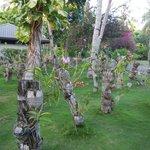 nursery d'orchidées