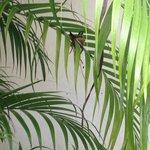 Emerald Hummingbird nesting