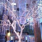 Денежное дерево Нага