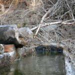 Brunnen aus Holz