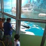 fotos do aquario