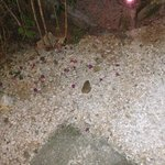 Cane toad outside the room