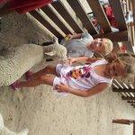 Nuestros hijos dandole alimentando los corderitos