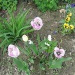 майские цветочки